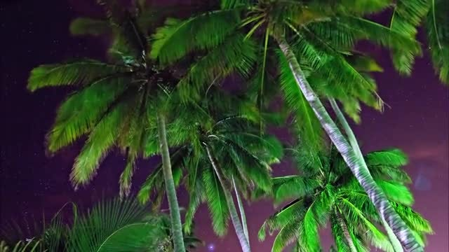 Time Lapse Of Palm Trees: Stock Video