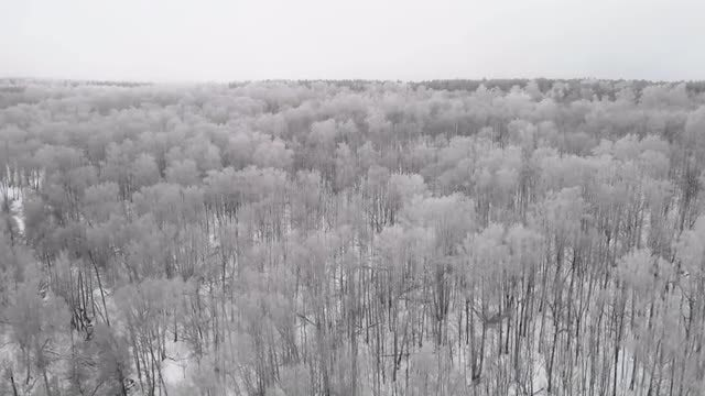 Beautiful Forest In Winter: Stock Video