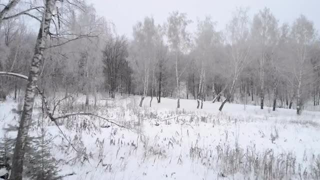 Fly out of winter forest: Stock Video