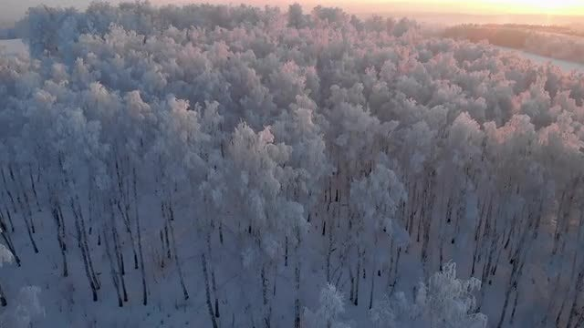 A Frosty Forest At Sunrise: Stock Video