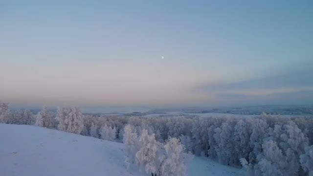 Winter Forest At Dusk: Stock Video