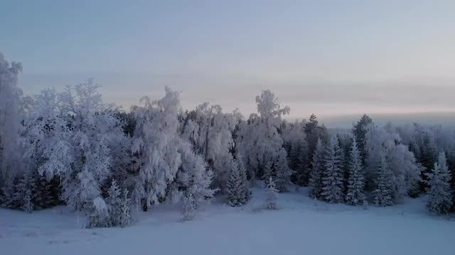 Panoramic Shot Of A Forest In Winter: Stock Video