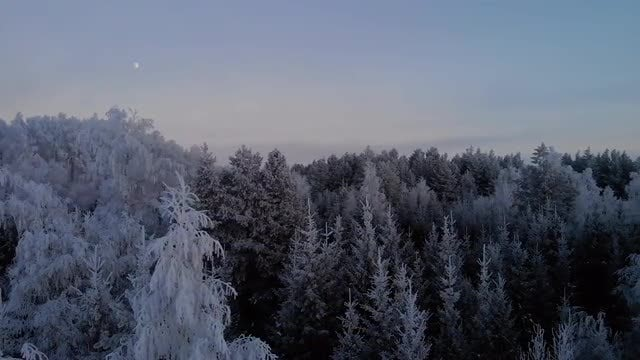 Icy Forest In The Early Evening: Stock Video