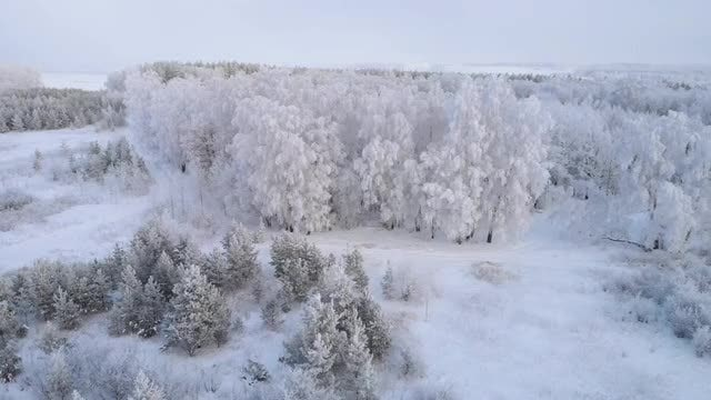 Flying Over An Icy Forest: Stock Video