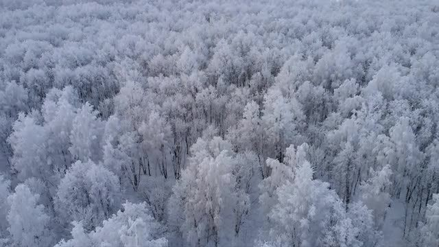Aerial Shot Of Snow-covered Forest: Stock Video