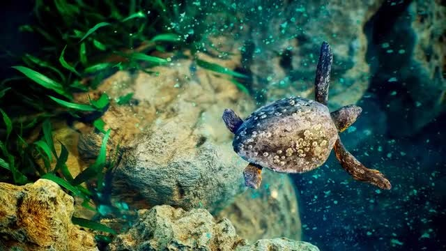 Underwater - Blue World 5: Stock Motion Graphics