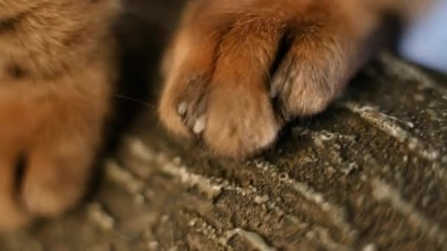 Cat Paws On Tree Bark: Stock Video