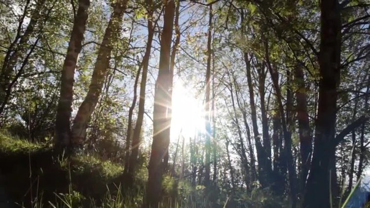 Sunny Springtime Forest: Stock Video