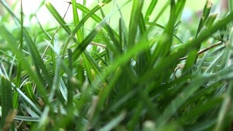 Green Grass Close Up Background: Stock Video