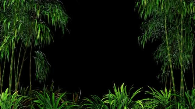 Bamboo Forest Overlay: Stock Motion Graphics