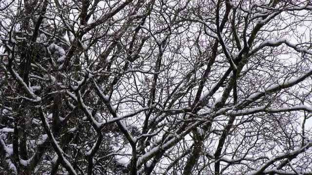 Snowflakes Falling On Trees: Stock Video