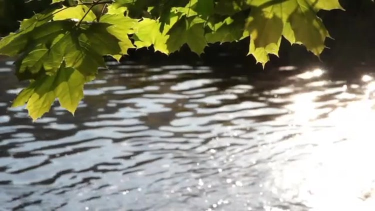 Leaves And River: Stock Video