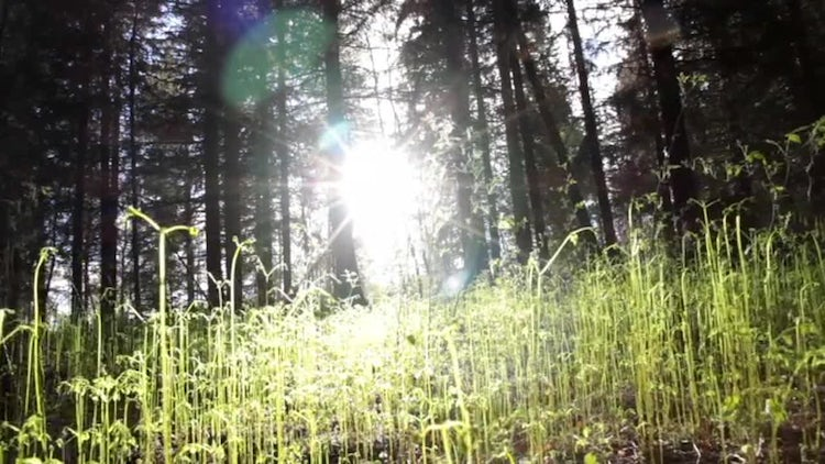 Fern In The Forest: Stock Video