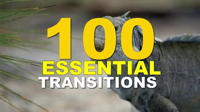 Seamless Transitions // Essential Package: After Effects Templates