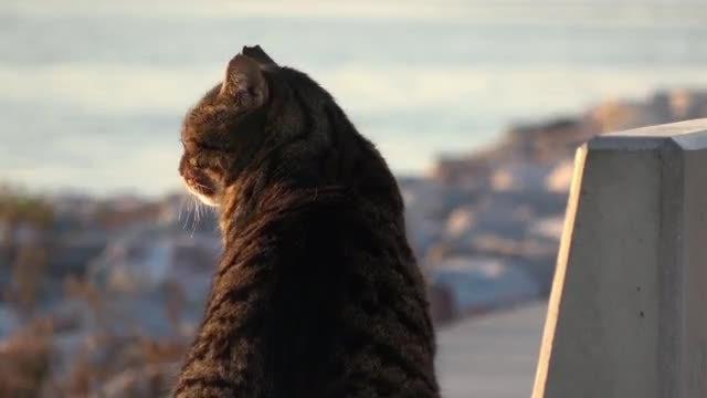 Street Cat: Stock Video