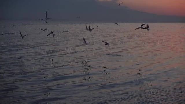 Seagulls Flying Over The Sea: Stock Video