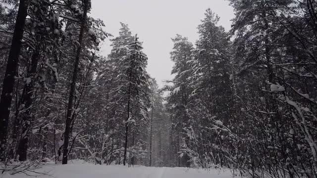POV Of A Snow-Covered Forest: Stock Video