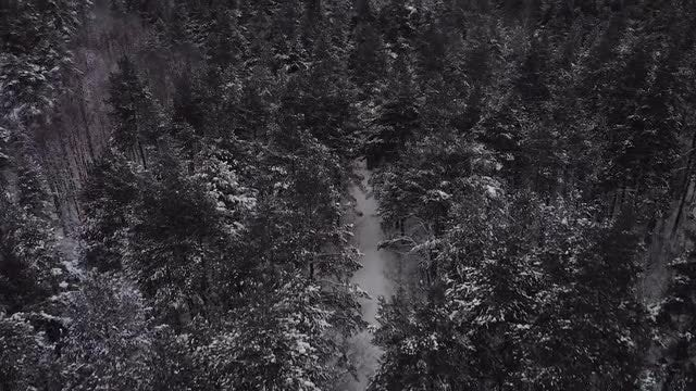 Aerial Shot Of A Forest In Winter: Stock Video