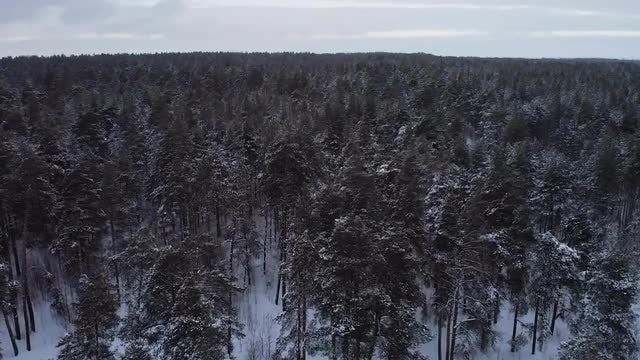 The Winter Forest: Stock Video