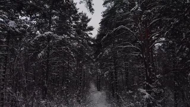 Icy Forest Path: Stock Video