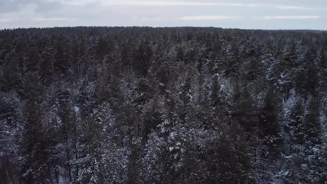 A Snowy Forest: Stock Video