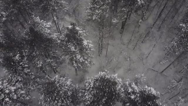 Frosty Tree Tops: Stock Video