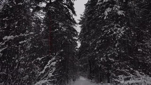 Go To The Winter Forest: Stock Video