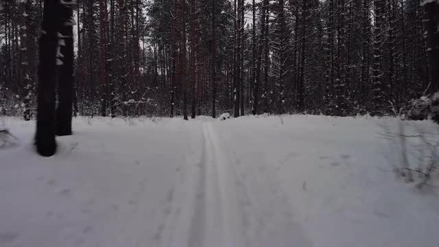 Skiing In The Forest: Stock Video