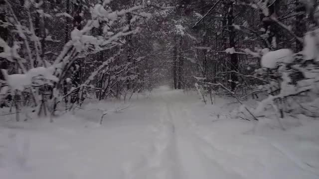 Flying Along The Trail In The Winter Forest: Stock Video