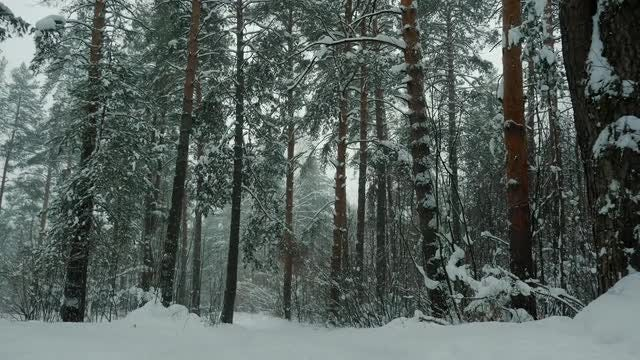 Beautiful Forest In The Snow: Stock Video
