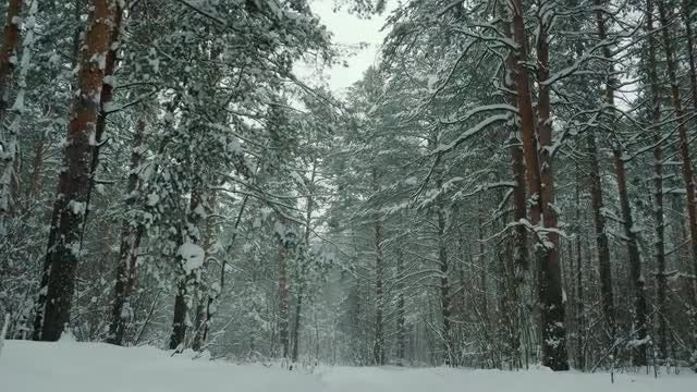 Lonely Winter Forest Panorama: Stock Video