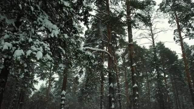 Walking Between The Trees On A Winter Day: Stock Video