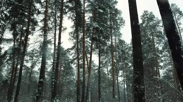 Winter Forest Closeup: Stock Video
