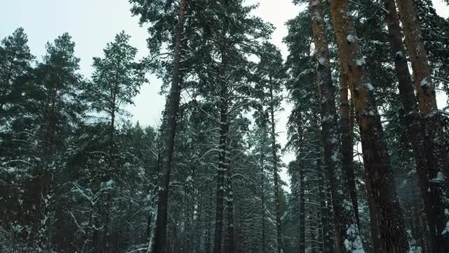 Snowy Day Walk Through Forest: Stock Video
