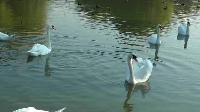 Life In The Lake: Stock Video