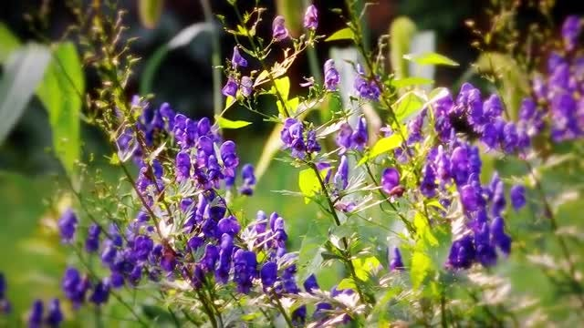 Summer Flowers: Stock Video
