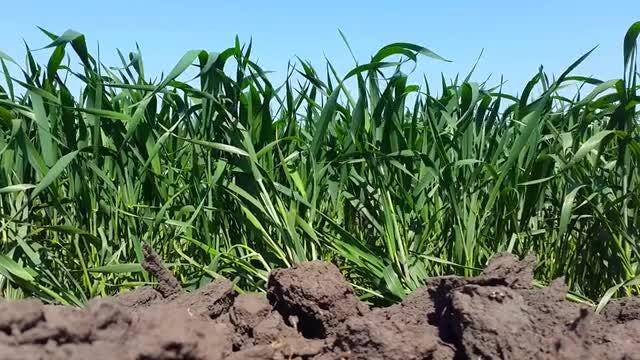 Close-up Of A Grassland: Stock Video