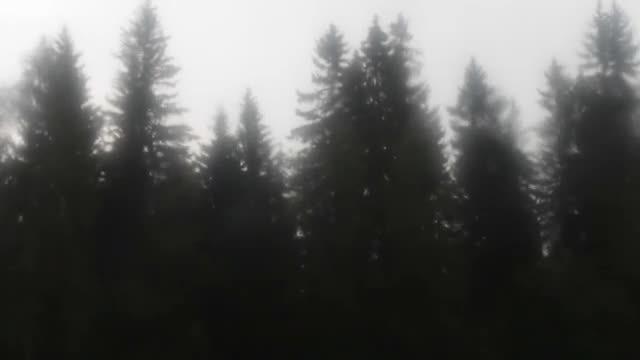 Rainy Day: Stock Video