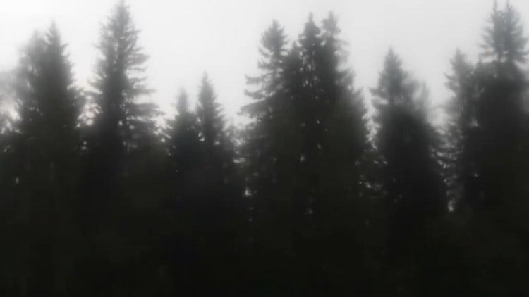 Rainy Day: Stock Video