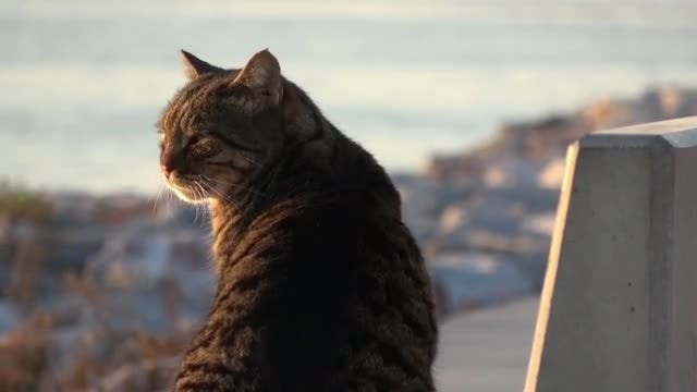Street Cat Looking At Camera: Stock Video