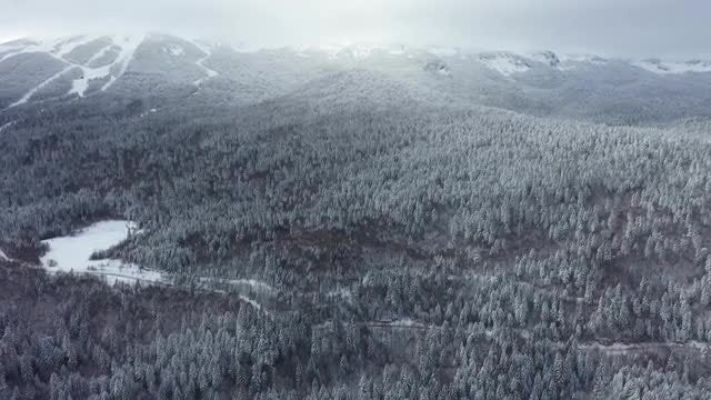 Forest Aerial View: Stock Video