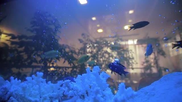 Fish In Aquarium: Stock Video