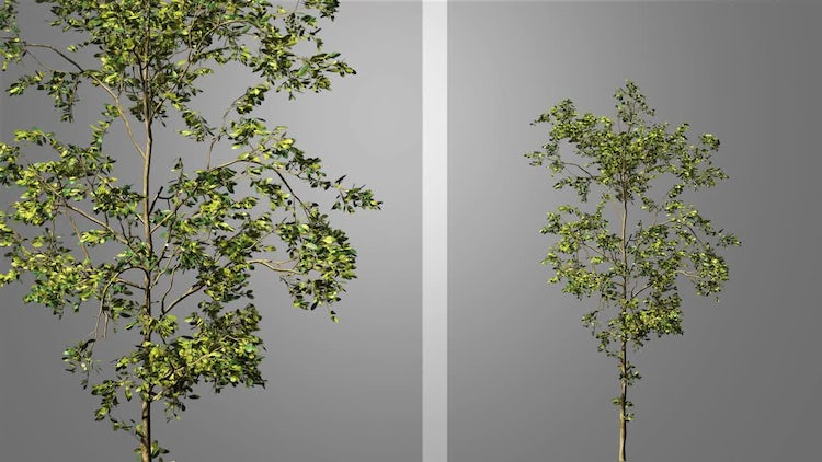Growing Tree Pack: Stock Motion Graphics