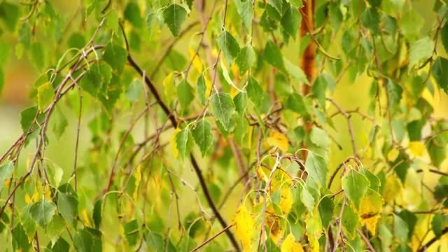 Leaves In The Wind: Stock Video