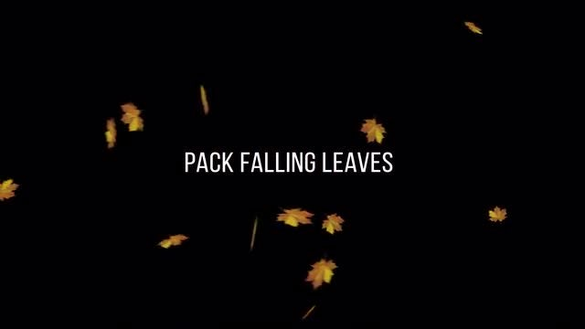 Pack Falling Leaves With Alpha Channel: Stock Motion Graphics