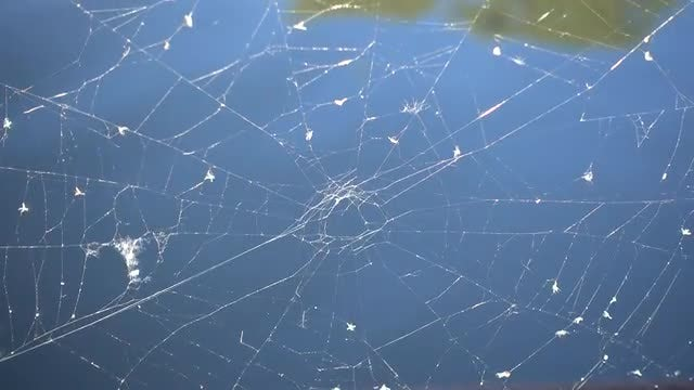 A Spider Web: Stock Video