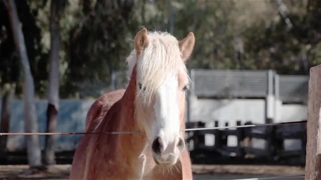 Horse Front View: Stock Video