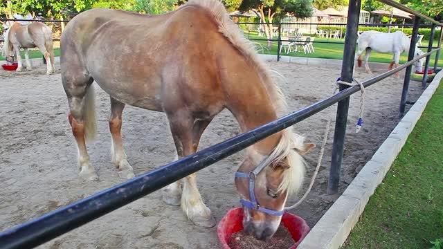 Three Horses Eating: Stock Video
