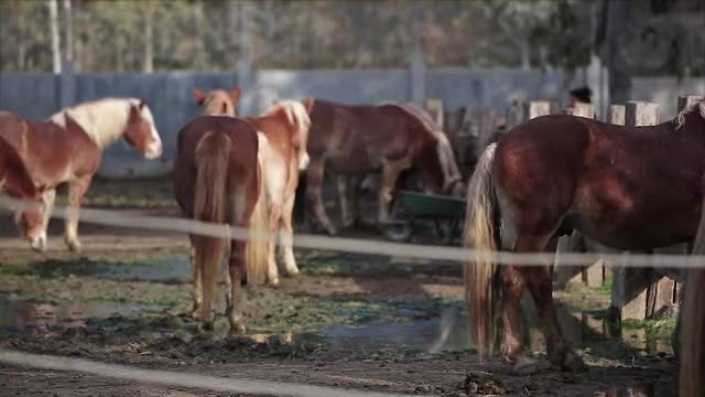 Horses In A Pen: Stock Video
