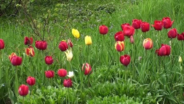 Romantic Garden Flowers: Stock Video